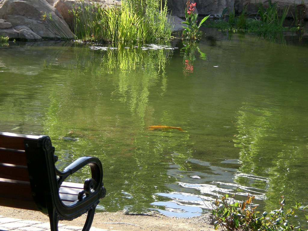 Terrific Park Bench Beside Pond With Goldfish Spinning The Zephyr Machost Co Dining Chair Design Ideas Machostcouk