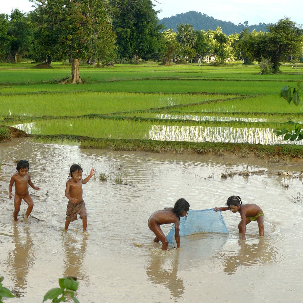 Fluidr / Lao kids fishing in the paddy fields by B℮n