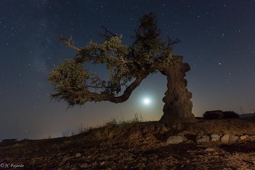 El olivo y la luna / The olive tree & tha moon