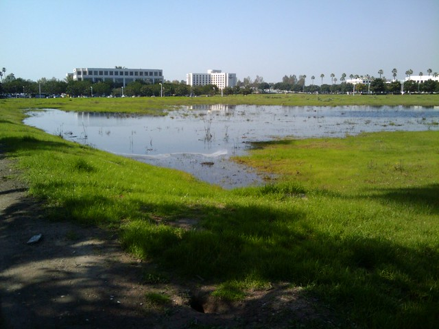 Office Park Ponds (3/3)