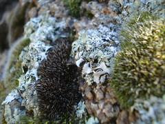 Moss on rocks near Watson Lake 1