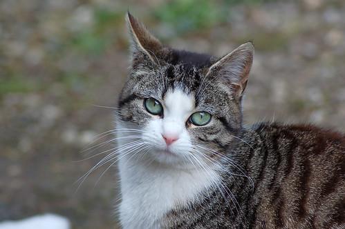 20100313_160440 Cat'ch Eyes by photowehrli