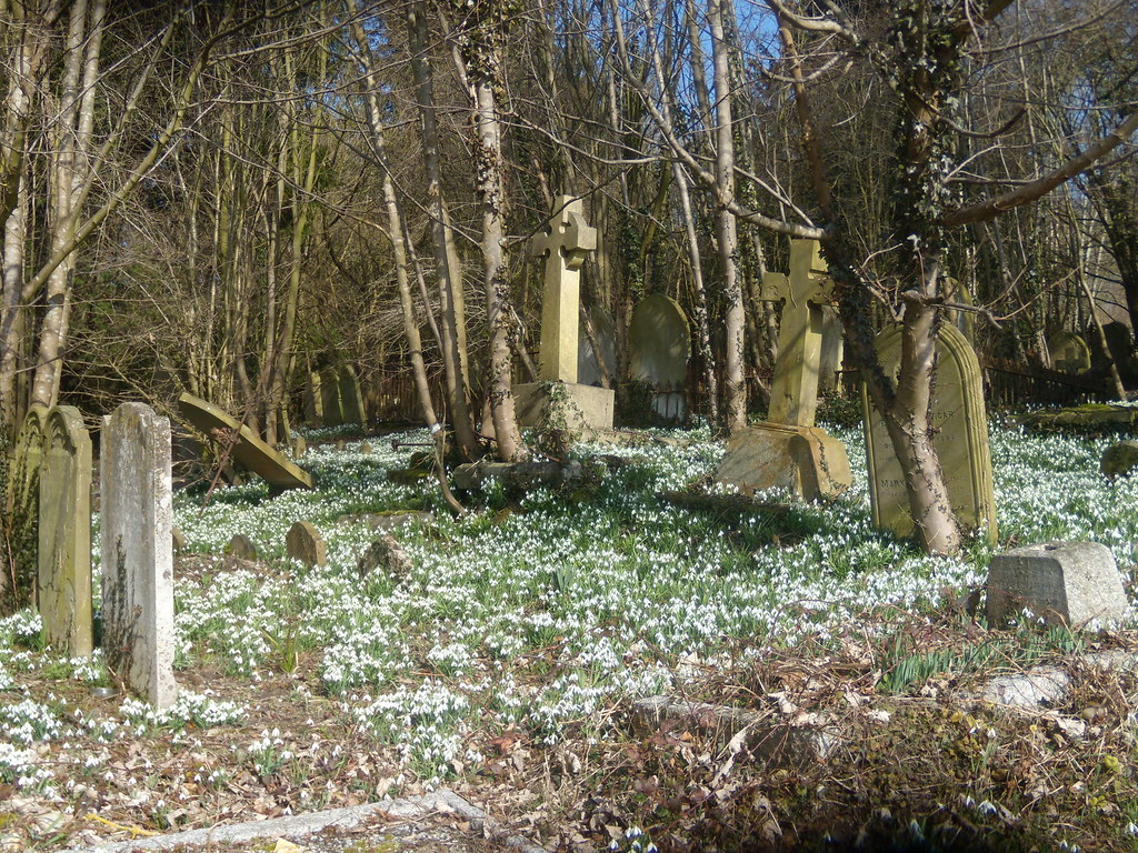 Snowdrops in the churchyard - St Peter and St Paul's Great Missenden to Amersham