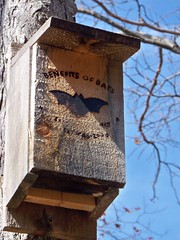 birdhouse, insect, bird,