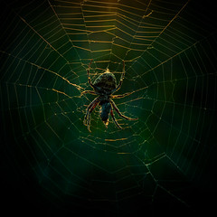 Spider in the sunlight