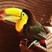 Tucans in Hotel Santa Clara by HE~GOES
