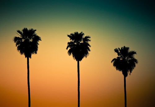 trees sunset arizona get southwest phoenix silhouette evening cuba palm filter closer lightroom the southmountain preset i