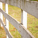 Small photo of White Fence