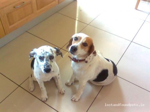 Fri, Apr 9th, 2010 Lost Male Dog - Near Creaghnacarragh, Ballinagleara -  Dowra, Leitrim