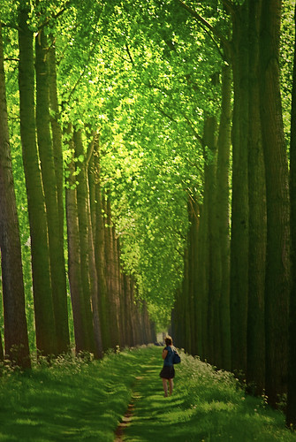 trees tree canal nikon belgium belgique bruges kanaal flanders flandres damme vlaanderen platpays abigfave d40x paololivornosfriends