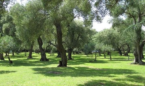 oliivilehto-Lokrum-2010b by Anna Amnell