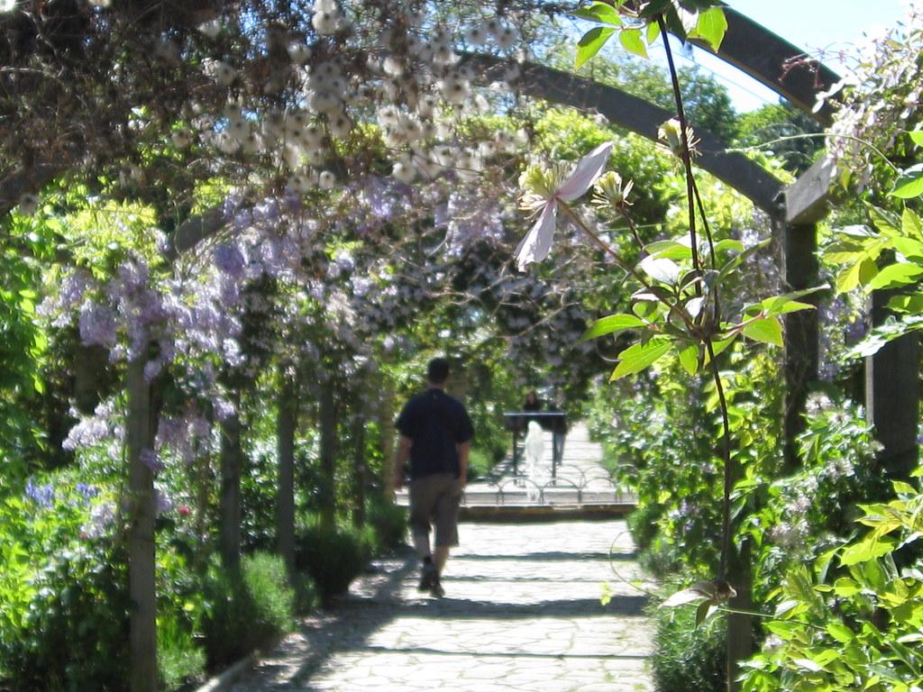 Pergola in Sexby Garden, Peckham Rye Park