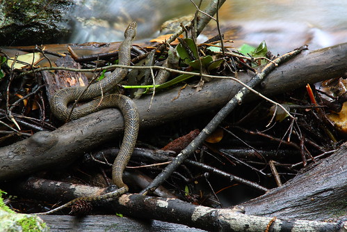 longexposure mountains nature creek nc stream snake northcarolina marion watersnake naturephotography mcdowellcounty tomscreek davidhopkinsphotography