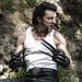 Small photo of Wolverine