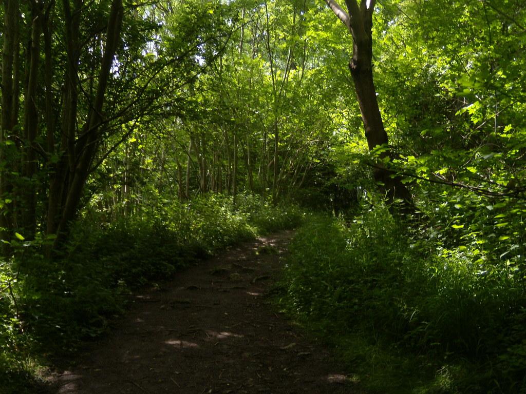 In the woods Sevenoaks Circular. Greensand Way