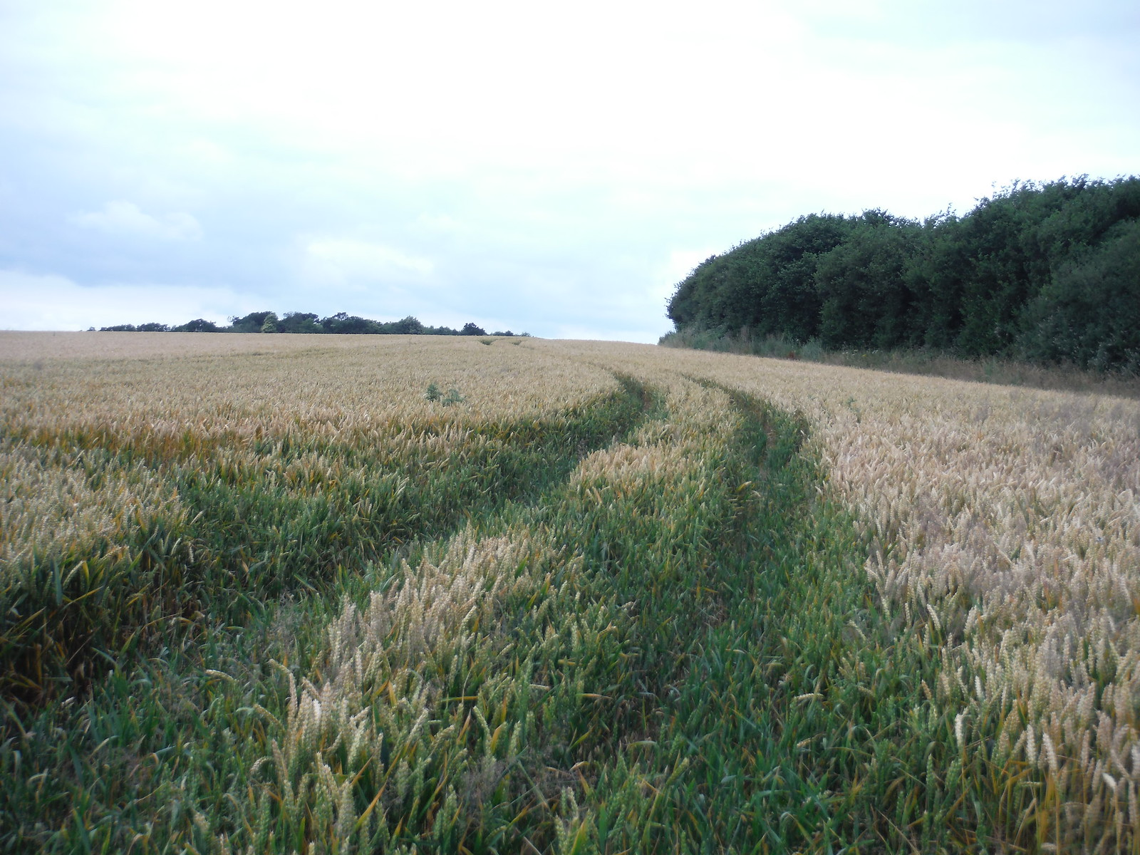 Large Arable Field, Easebourne SWC Walk 218 Haslemere to Midhurst (The Midhurst Way)