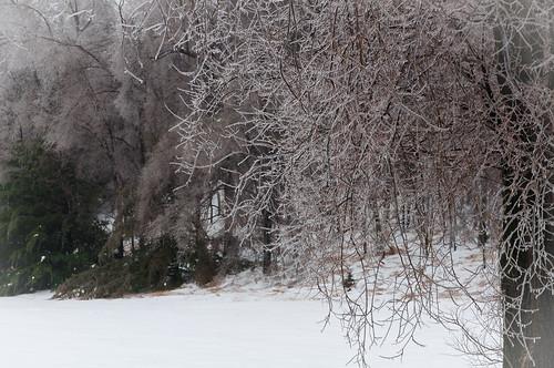 trees winter snow ice landscape nikon105mm nikkor105mmf28gvrmicro nikond5000