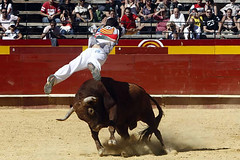 animal sports, rodeo, cattle-like mammal, bull, event, sports, bullring, charreada, matador, performance, bullfighting, bull riding,