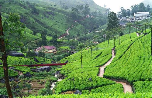 Manicured landscape, Sri Lanka
