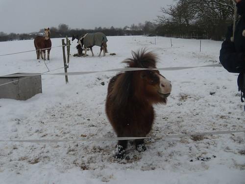 DSCN8375 Cold pony