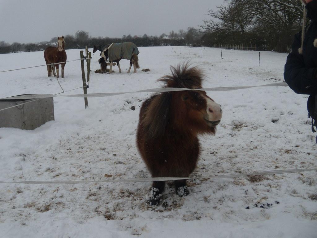 DSCN8375 Cold pony Staplehurst to Headcorn