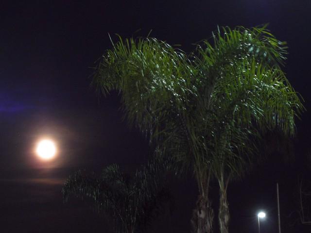 Pillar Moon
