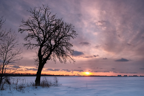 winter light sunset snow tree field germany landscape deutschland brandenburg hoenow hönow cokinp121m dietrichbojko globalindex