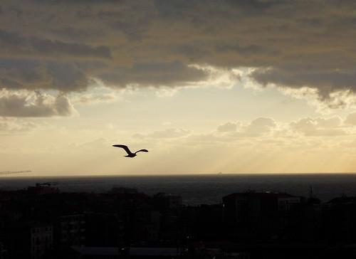 sky clouds landscape nuvole seagull cielo fotomie2009