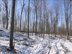 Fort Drum forestry management