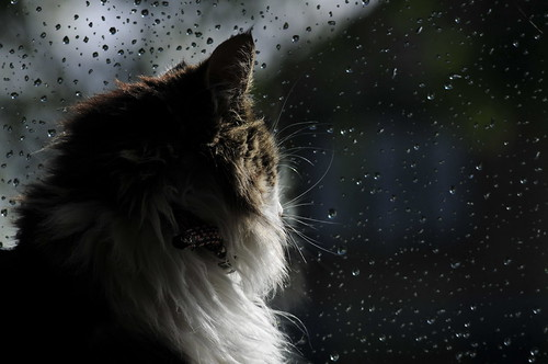 Looking at the rain