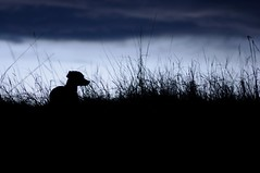 silhouette of tipper