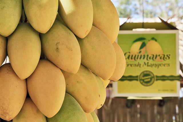 世界一のマンゴーを食べにギマラス島へ行こう