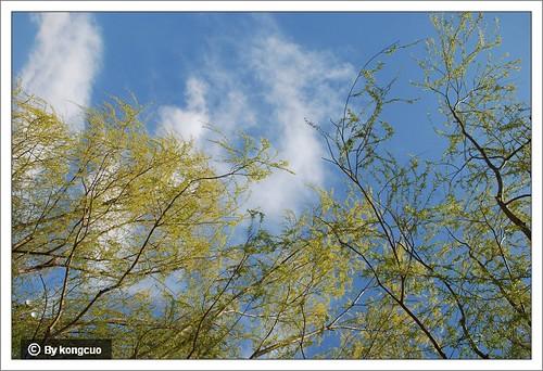 【图】垂柳和蓝天