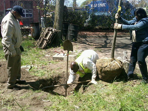 tree planting at United House of Prayer