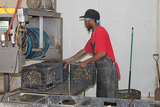 Working with oysters, Motivatit Seafoods (New Orleans, Louisiana)
