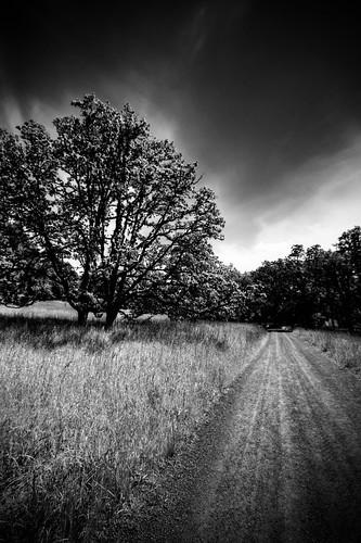 bw oregon canon arboretum mount springfield pisgah 50d