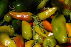 cayenne pepper(0.0), bell pepper(0.0), plant(0.0), chili pepper(1.0), vegetable(1.0), yellow pepper(1.0), serrano pepper(1.0), tabasco pepper(1.0), peppers(1.0), bell peppers and chili peppers(1.0), italian sweet pepper(1.0), bird's eye chili(1.0), peperoncini(1.0), produce(1.0), food(1.0), pimiento(1.0), malagueta pepper(1.0), jalapeã±o(1.0),