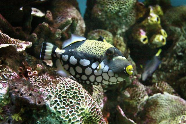 Baltimore md aquarium flickr photo sharing for Maryland freshwater fish