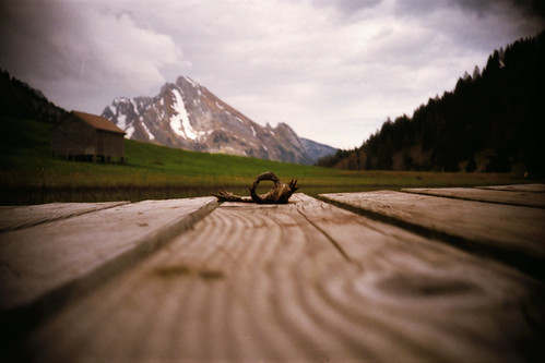wood lake eye film animal analog 35mm dead foot death schweiz switzerland see wooden lomo lca lomography rat fuji view floor body path low ground frog 200 rats fujifilm lc tot frosch tod tier schafberg boden moning c200 toggenburg leiche markusmoning gräppelensee gräppelen