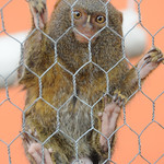 Protecting His Turf - Guayaquil, Ecuador