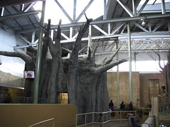 Articial baubab tree in the middle of the africian savannah building