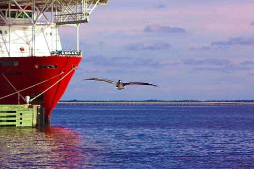 county bridge blue red green bird water bay three pier boat wings dock ship florida vessel pelican docked mile pensacola municipal 7275 escambia