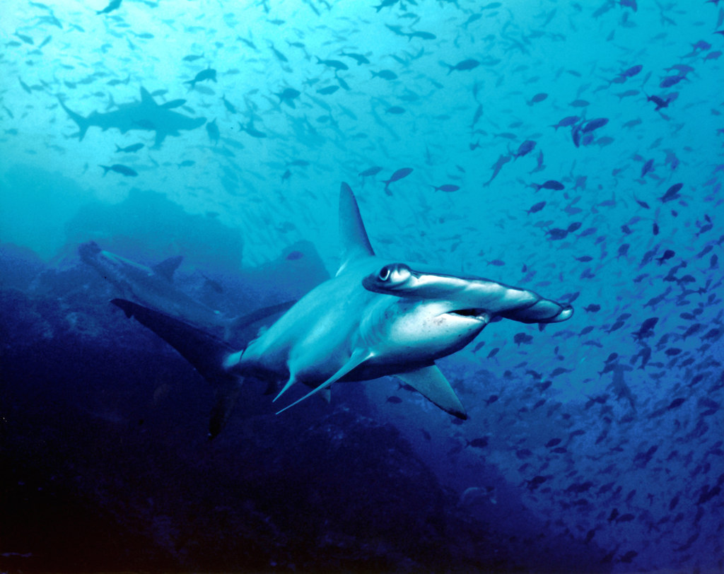 Most Beautiful Places to Scuba Dive