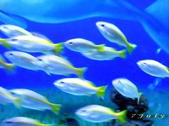 coral reef(0.0), goldfish(0.0), reef(0.0), fish(1.0), coral reef fish(1.0), organism(1.0), marine biology(1.0), freshwater aquarium(1.0), underwater(1.0), pomacentridae(1.0),