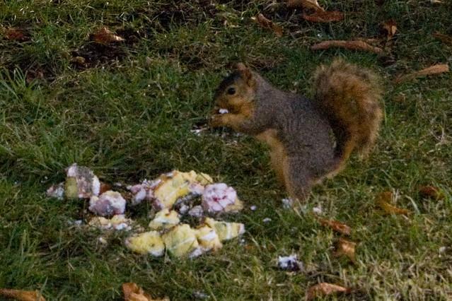 Make Squirrel Cake