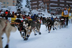 animal sports, racing, dog, winter, sports, snow, mushing, dog sled, land vehicle, sled dog racing,