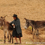 Taking Donkeys to Market - Tarabuco, Bolivia