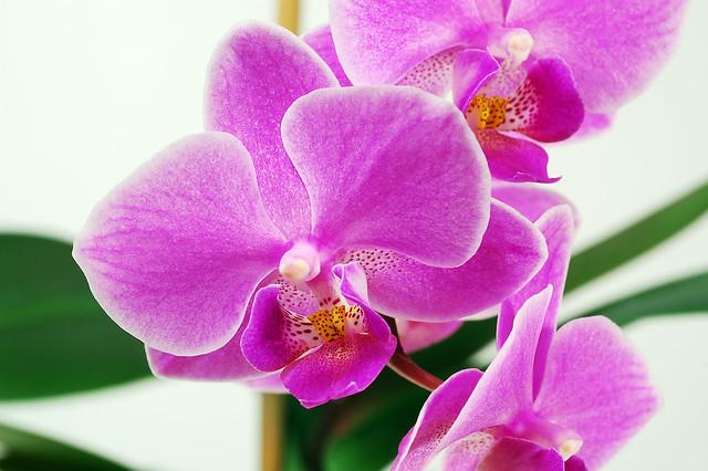 centerpiece would be an arrangement of low purple orchids Wedding