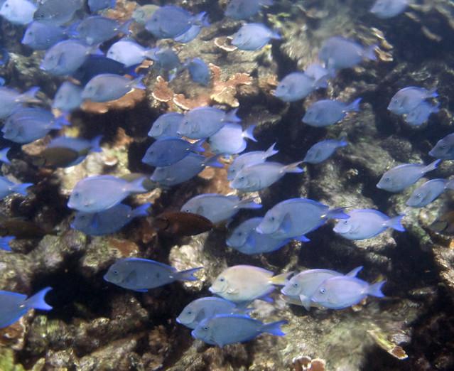 Blue Shoal 3