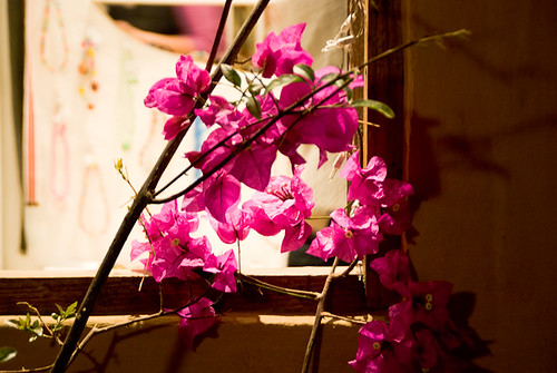 wood pink flowers window nature night outside colombia branch newyear celebration vegetation añonuevo celebración villadeleyva boyaca